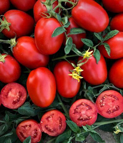 Підбираємо кращі гібриди томатів