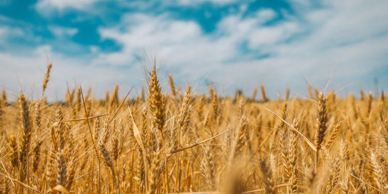 З Днем Незалежності, аграрії