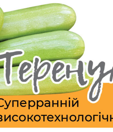 Суперранній високотехнологічний гібрид кабачка – ТЕРЕНУМ F1